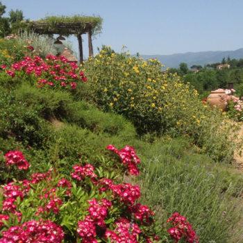 Realizzare una scarpata fiorita. Parte II