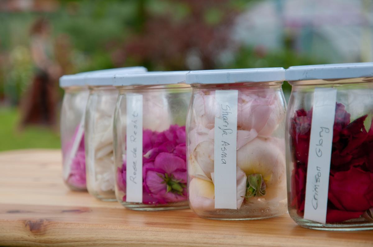 Le migliori varietà di Rose Profumate