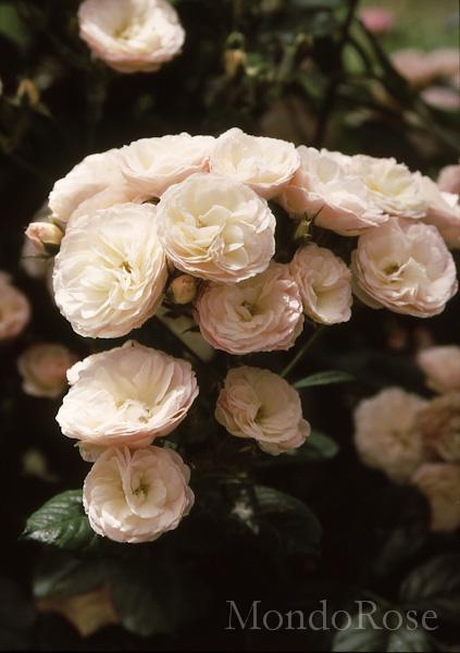 Bouquet Parfait ®