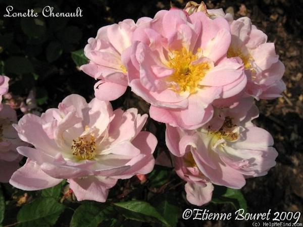 Lonette Chenault